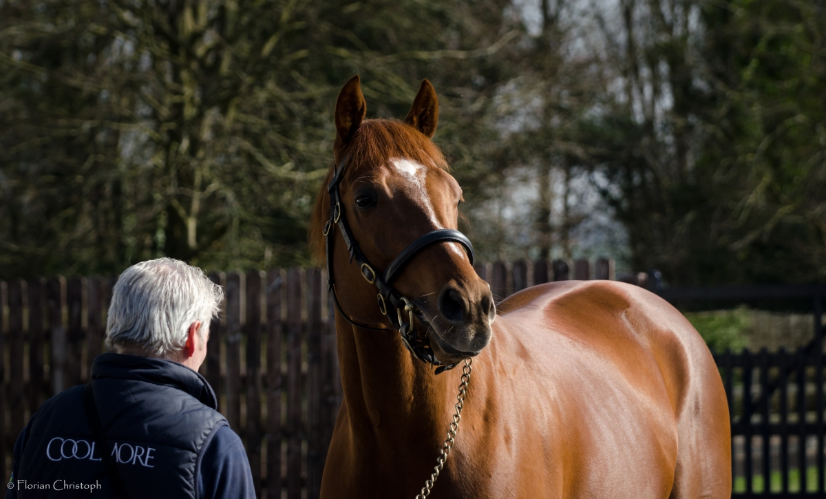 Photo Gallery - Coolmore Stud Ireland