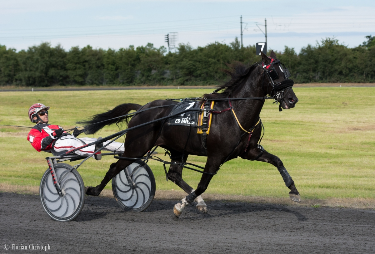 Harness Racing in Ireland