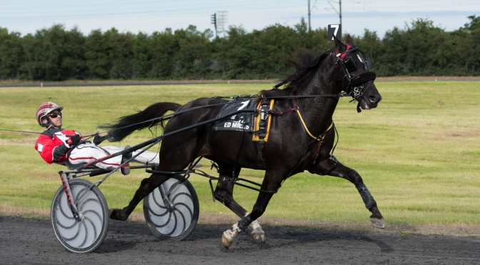 Harness Racing at Portmanock
