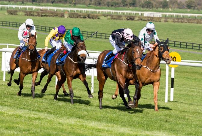 Crystal Ocean – a Derby contender?